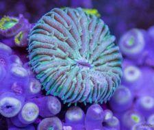 Vídeo increíble del micro-mundo oceánico visto en formato timelapse