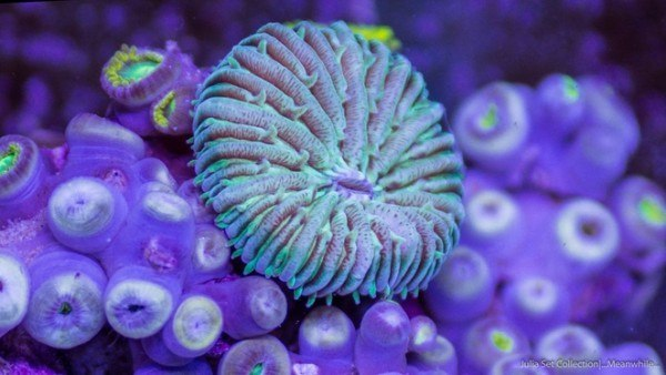 video-del-micro-mundo-oceanico-visto-en-formato-timelapse