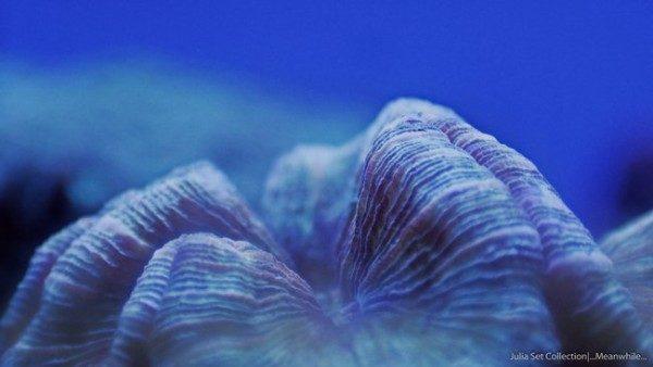 video-increible-del-micro-mundo-oceanico-visto-en-formato-timelapse-escena-2