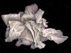 Cómo secarse las manos con una sola toalla de papel