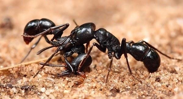 C mo hacer que las hormigas se vayan de vuestra casa de - Como terminar con las hormigas en casa ...