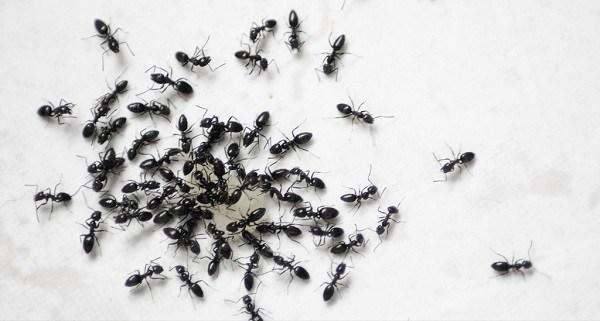 proteger casa de hormigas