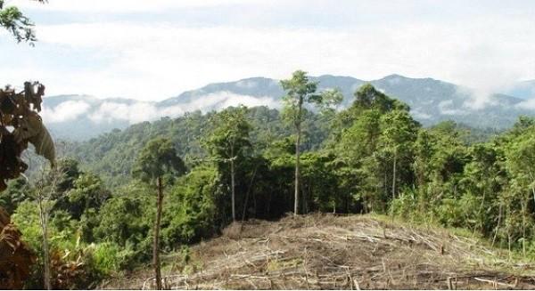 reciclar papel deforestacion