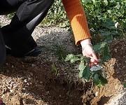 Por qué plantar árboles importa, y mucho