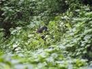 Plantas medicinales en peligro de extinción en Uganda