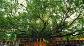 Los 20 árboles más importantes del planeta