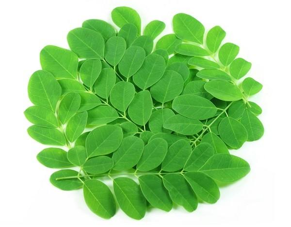 hojas moringa oleifera