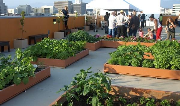 Los jardines en azoteas podr an ayudar a combatir la for Jardin en azotea diseno