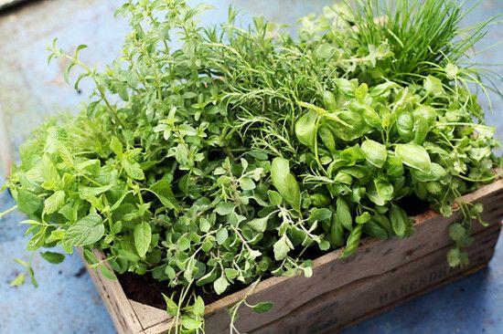 10-formas-naturales-de-mantener-fresca-la-casa-en-verano-coloca-plantas