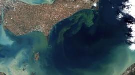 """Alarma en el mundo por el descubrimiento de """"zonas muertas"""" o sin vida en el Océano Atlántico"""