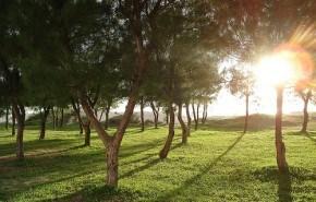 Para vivir en Brasil habrá que plantar muchos árboles