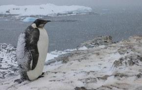 Cerca del 75% de las colonias de pingüinos de la Antártida se encuentran en peligro