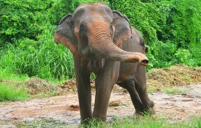Elefante chino deja las drogas