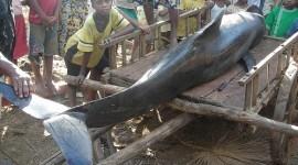 Mueren treinta ballenas en Madagascar