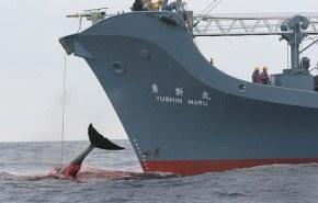 Ecologistas retenidos por ballenero japonés