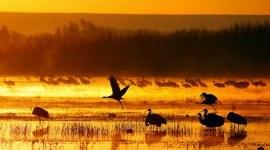 22 de mayo: Comprendiendo la importancia de la Biodiversidad