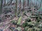 El bosque Aokigahara o Mar de Árboles