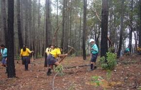 México cierra el año con 250 millones de árboles plantados