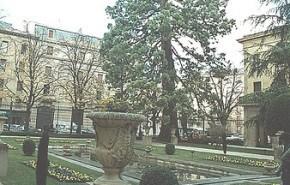 Sequoia del Palacio de Navarra será protegida por un pararrayos