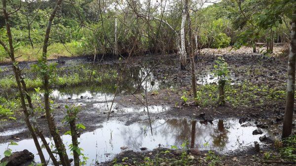 Aguas contaminadas con ácido sulfúrico y otros tóxicos que vierten indiscriminadamente los responsables de mantener en funcionamiento los pozos de petróleo de PDVSA. Eje Torunos – San Silvestre