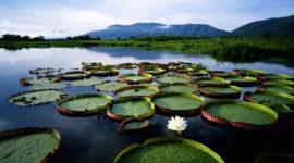 La Selva Amazónica en Peligro por la Explotación Petrolera