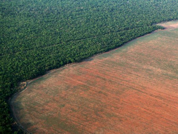 Un área de la selva amazónica de Brasil fue deforestada y preparada para el cultivo de soja