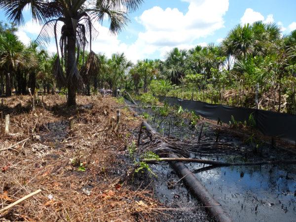 Vertidos y deforestación, legado de la industria petrolera