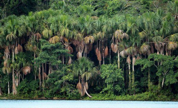 la-selva-amaznica-en-peligro-por-la-explotacin-petrolera-amazonia-riqueza-forestal
