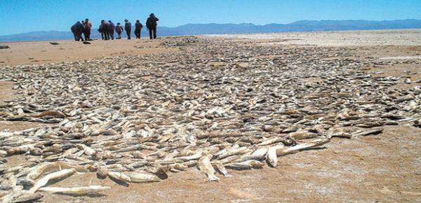 Millones de peces mueren en las orillas del Lago Poopó, Noviembre de 2014