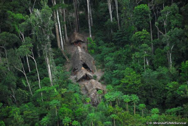 Los poblados Indígenas ven como todo su ecosistema desaparece
