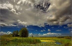 75.000 hectáreas de cultivo serán devueltas a los Everglades de Florida