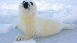 Brigitte Bardot y Nicolas Sarkozy se unen para defender a las focas