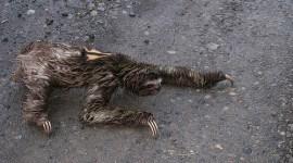 Rescatan animales maltratados de un zoológico de Arona