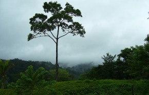 "21 de Marzo: ""Día Forestal Mundial"""