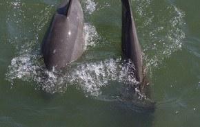 Se confirmó: los delfines murieron por contaminación