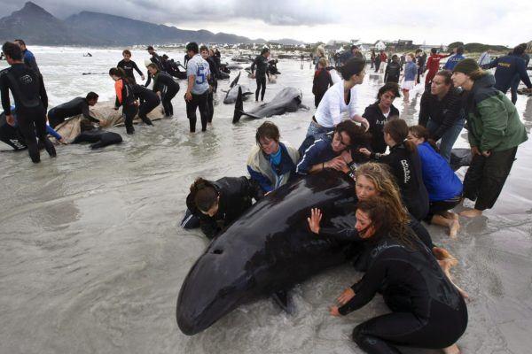 contaminacion-de-los-mares-ballenas-varadas
