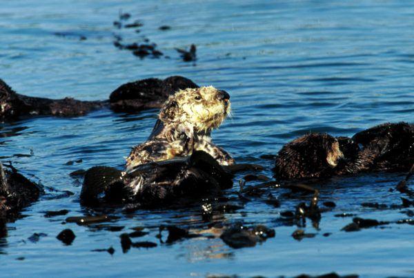 contaminacion-de-los-mares-petroleo