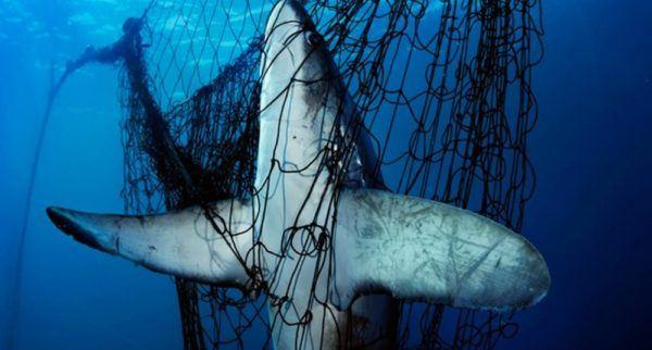contaminación-de-los-mares-redes-fantasma