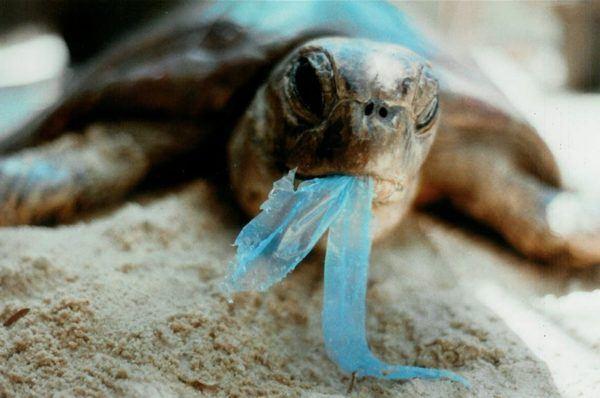 contaminacion-de-los-mares-tortuga-comiendo-plasticos