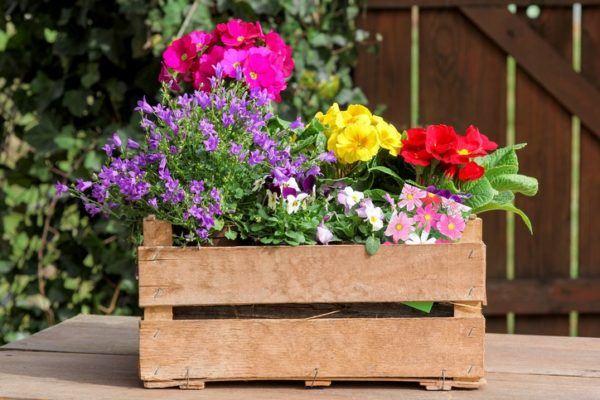 Macetas recicladas macetas con caja de madera