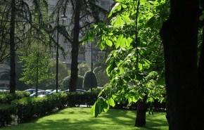 Gijón tiene previsto plantar este año más de 3 mil árboles