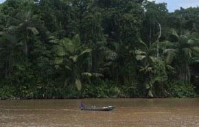 Crece la deforestación de la selva amazónica