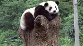Un terremoto afecta a la principal reserva de pandas del mundo