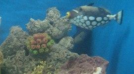 El Parque Oceánico de Manila acusado de tener animales en malas condiciones