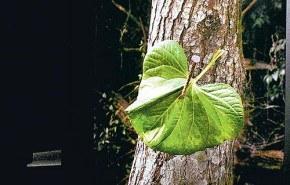 Fotografías argentinas revelan el sufrimiento de los árboles