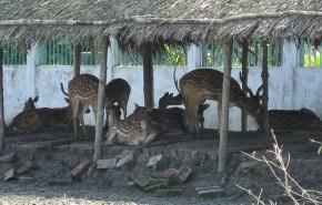 Sidr destruyó a los Sunderbans, el mayor manglar del mundo