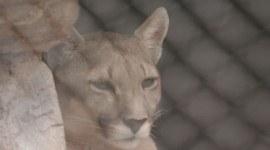Rescatan animales en peligro de extinción