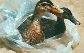 La prohibición de las bolsas de plástico en China ahorrará 37 millones de barriles de petróleo