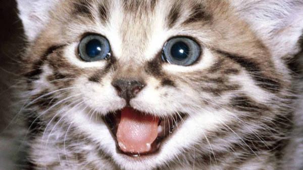 como-hacer-a tu--gato-feliz