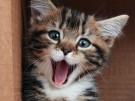 ¿Cómo hacer a un gato feliz?